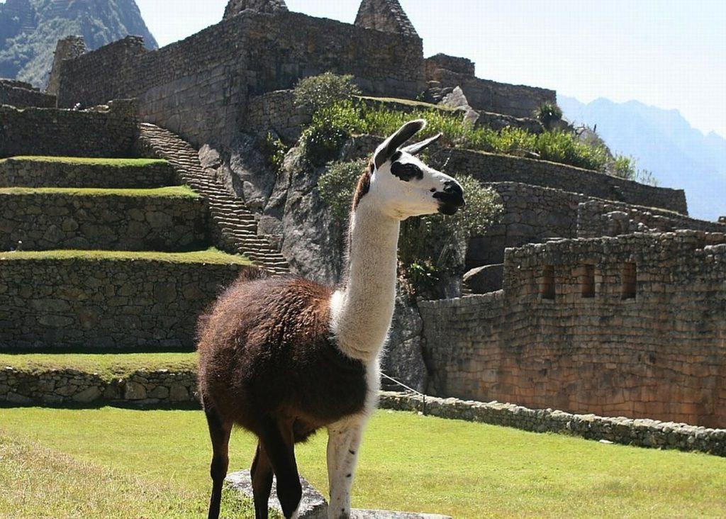 Comment réussir son voyage en Argentine ?